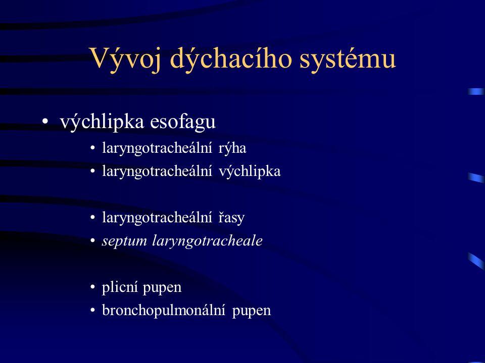 Vývoj dýchacího systému