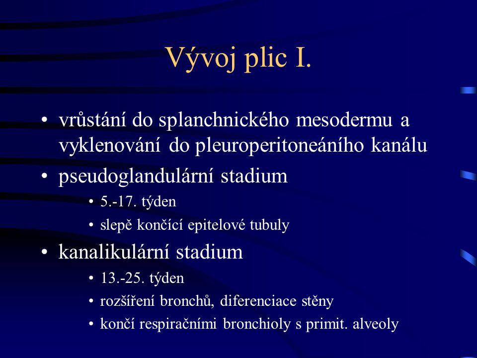 Vývoj plic I. vrůstání do splanchnického mesodermu a vyklenování do pleuroperitoneáního kanálu. pseudoglandulární stadium.