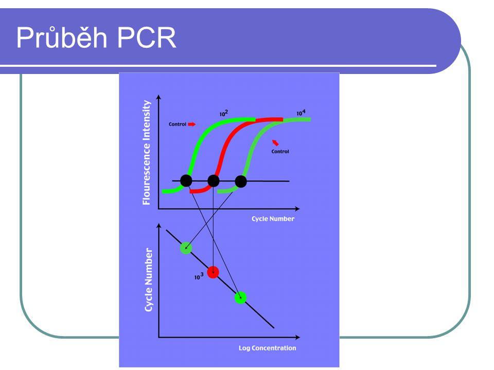 Průběh PCR