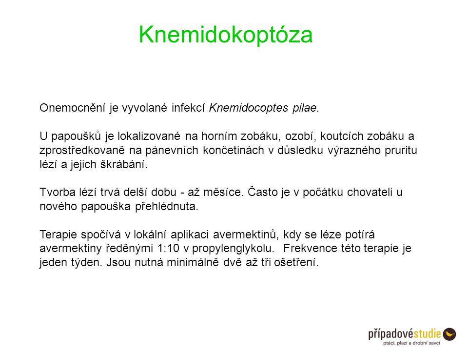 Knemidokoptóza Onemocnění je vyvolané infekcí Knemidocoptes pilae.