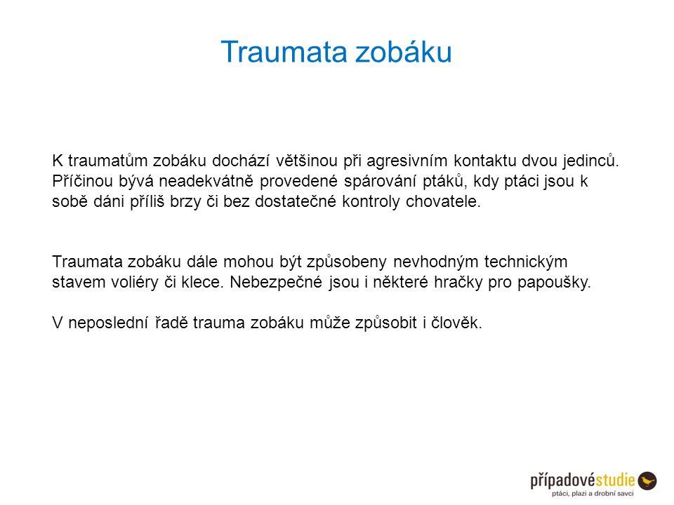 Traumata zobáku K traumatům zobáku dochází většinou při agresivním kontaktu dvou jedinců.