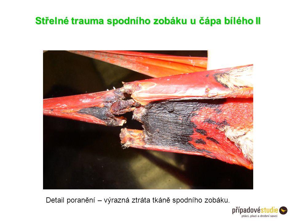 Střelné trauma spodního zobáku u čápa bílého II