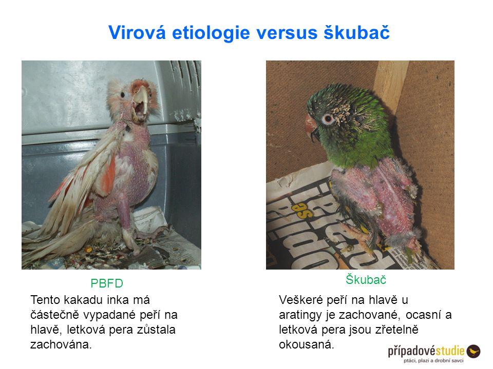 Virová etiologie versus škubač