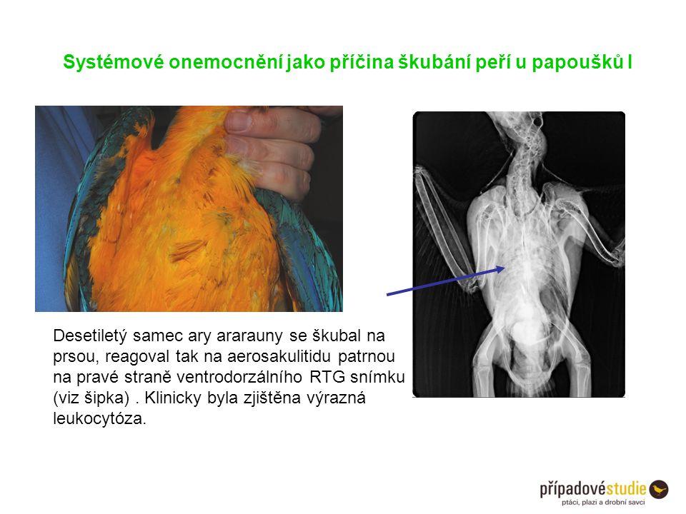 Systémové onemocnění jako příčina škubání peří u papoušků I