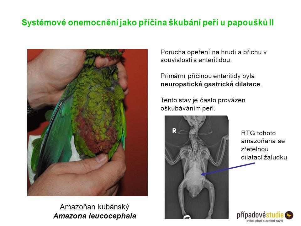 Systémové onemocnění jako příčina škubání peří u papoušků II