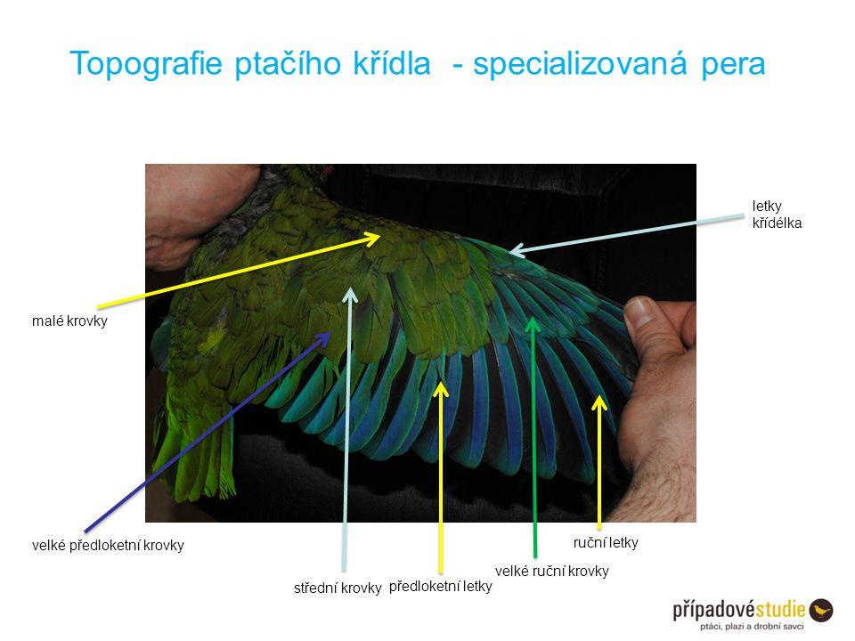 Topografie ptačího křídla - specializovaná pera