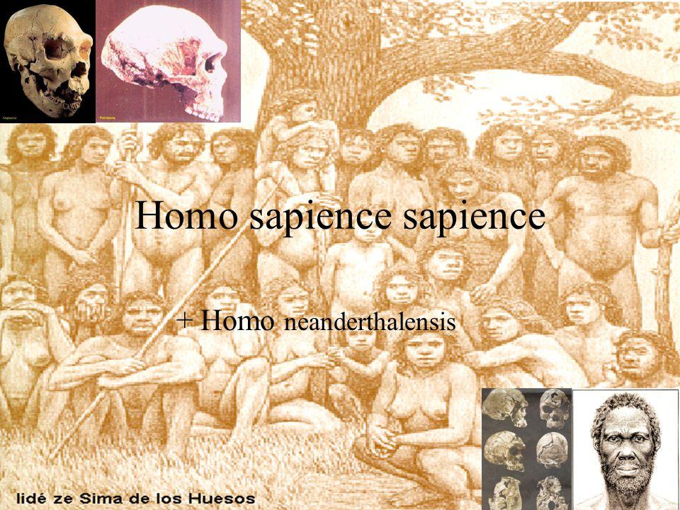 Homo sapience sapience