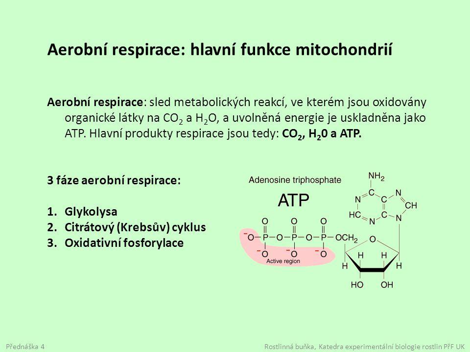 Aerobní respirace: hlavní funkce mitochondrií
