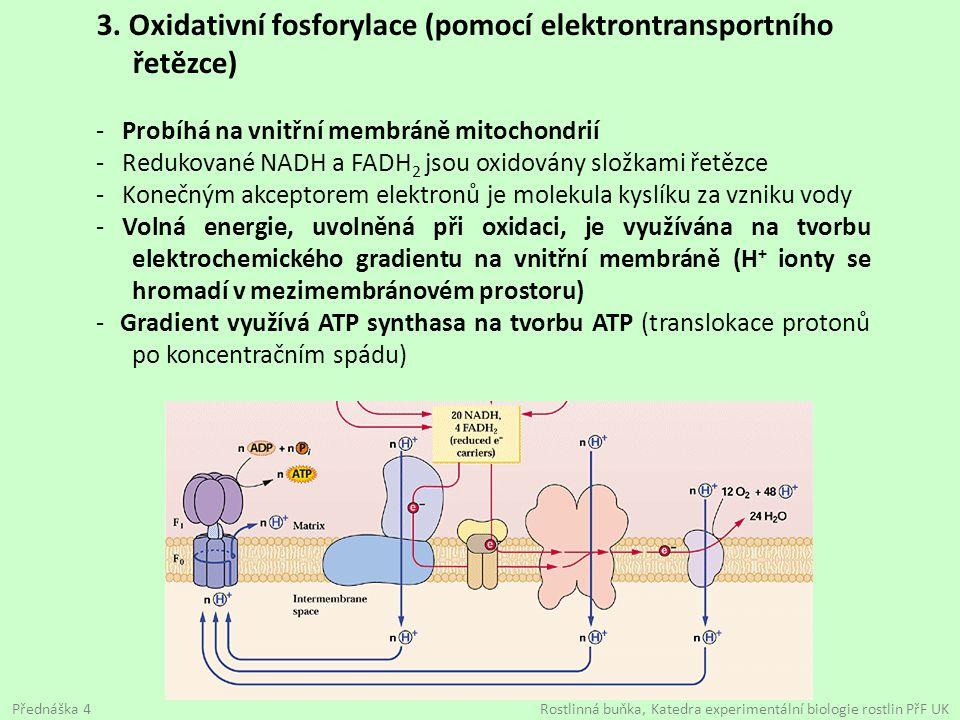 3. Oxidativní fosforylace (pomocí elektrontransportního řetězce)