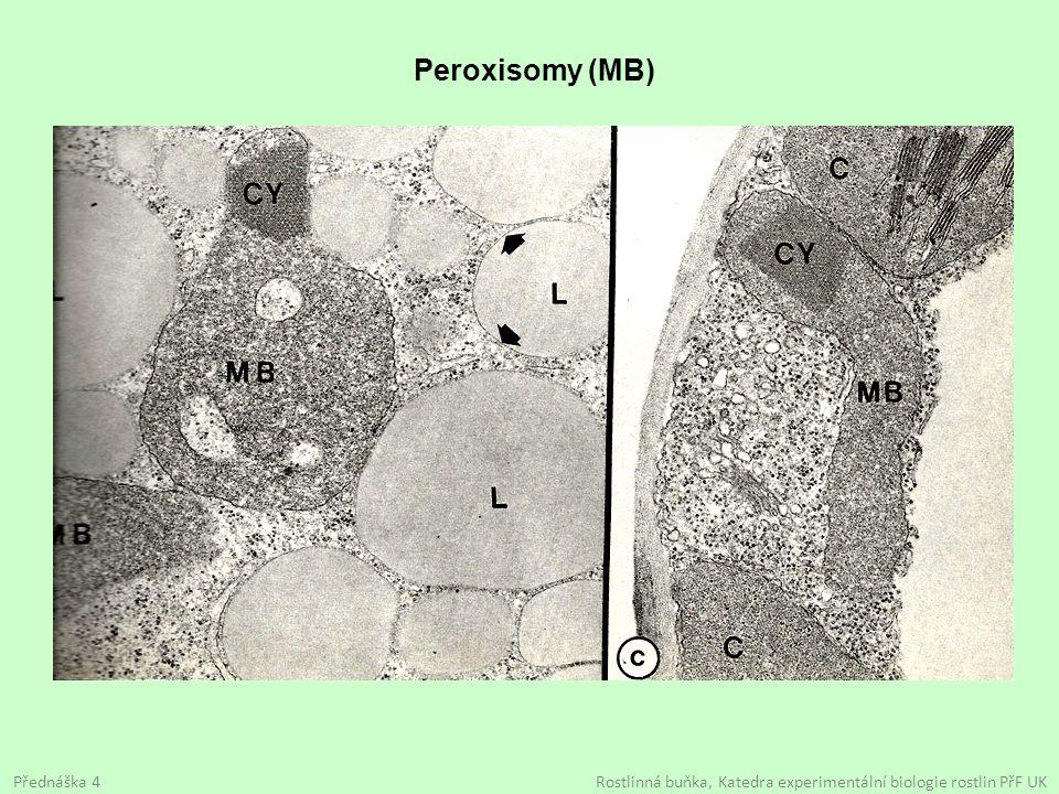 Peroxisomy (MB) Přednáška 4 Rostlinná buňka, Katedra experimentální biologie rostlin PřF UK.