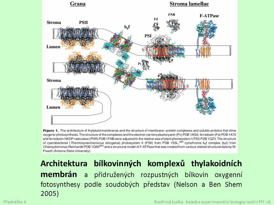 Architektura bílkovinných komplexů thylakoidních membrán a přidružených rozpustných bílkovin oxygenní fotosynthesy podle soudobých představ (Nelson a Ben Shem 2005)