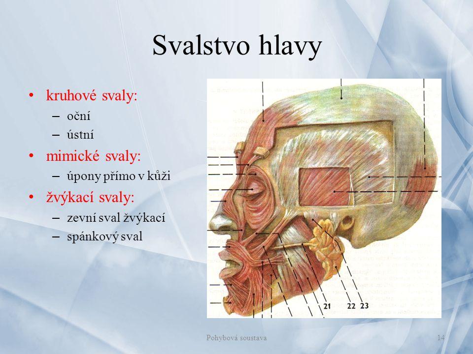 Svalstvo hlavy kruhové svaly: mimické svaly: žvýkací svaly: oční ústní