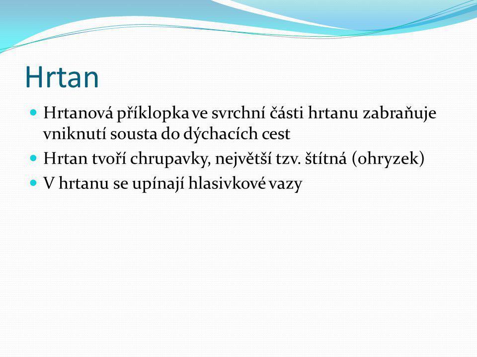 Hrtan Hrtanová příklopka ve svrchní části hrtanu zabraňuje vniknutí sousta do dýchacích cest. Hrtan tvoří chrupavky, největší tzv. štítná (ohryzek)