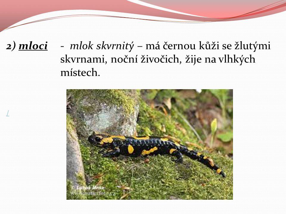 2) mloci - mlok skvrnitý – má černou kůži se žlutými skvrnami, noční živočich, žije na vlhkých místech.