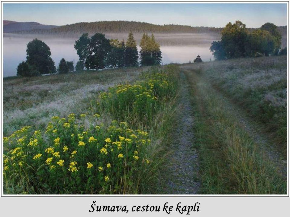 Šumava, cestou ke kapli