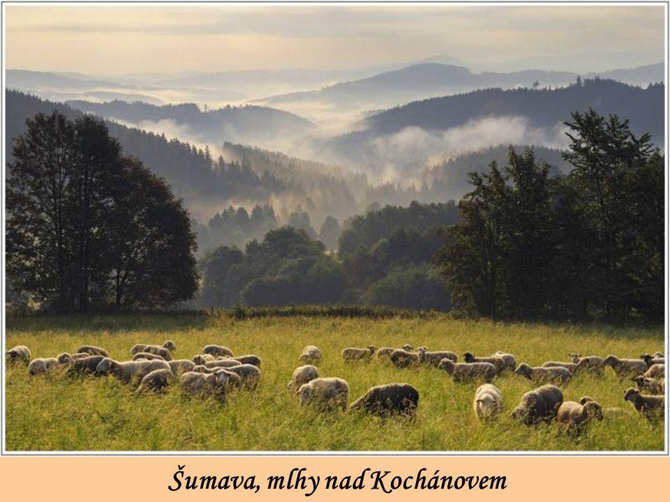 Šumava, mlhy nad Kochánovem