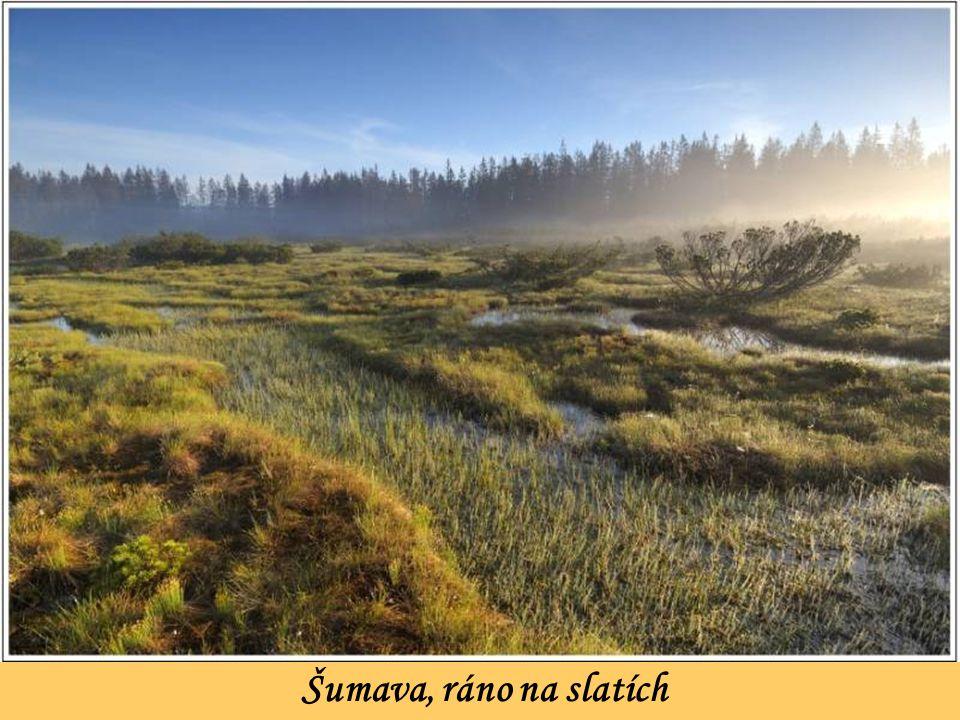Šumava, ráno na slatích