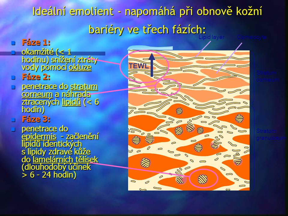 Ideální emolient - napomáhá při obnově kožní bariéry ve třech fázích:
