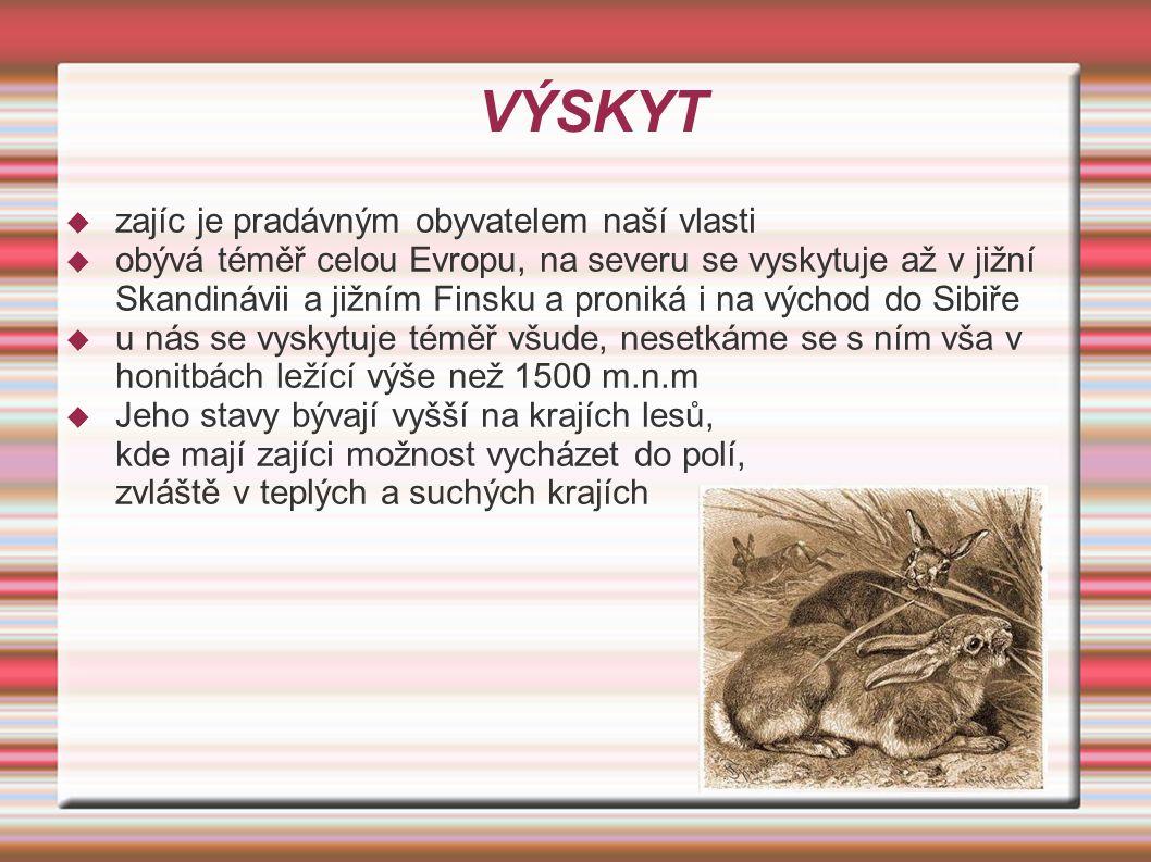 VÝSKYT zajíc je pradávným obyvatelem naší vlasti