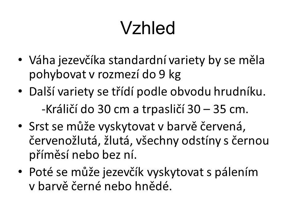 Vzhled Váha jezevčíka standardní variety by se měla pohybovat v rozmezí do 9 kg. Další variety se třídí podle obvodu hrudníku.