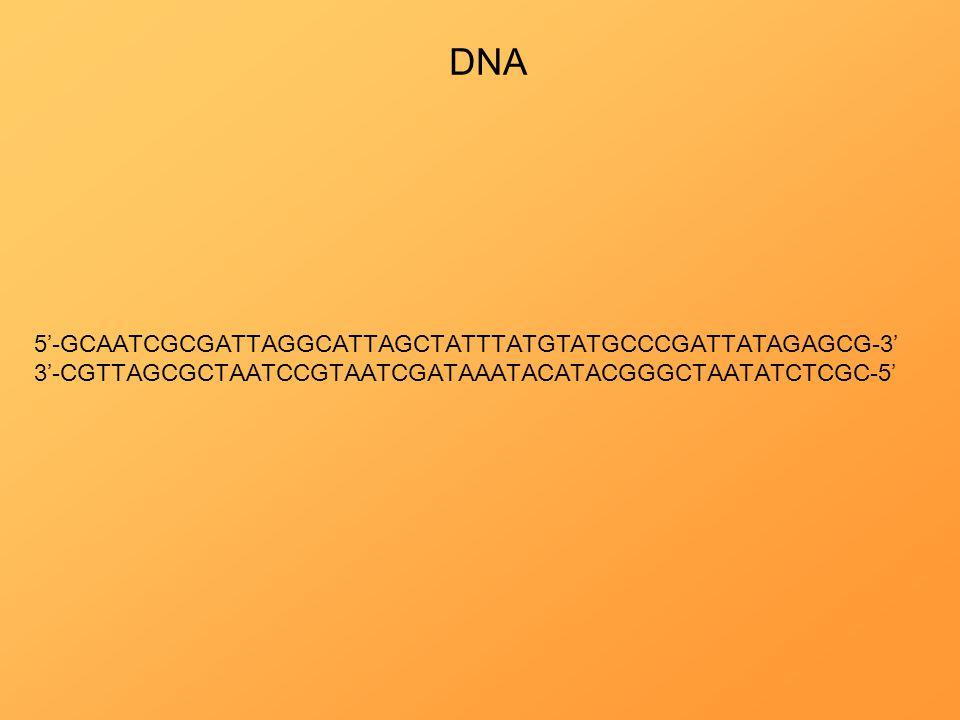 DNA 5'-GCAATCGCGATTAGGCATTAGCTATTTATGTATGCCCGATTATAGAGCG-3'