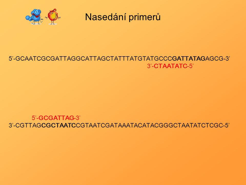 Nasedání primerů 5'-GCAATCGCGATTAGGCATTAGCTATTTATGTATGCCCGATTATAGAGCG-3' 3'-CTAATATC-5' 5'-GCGATTAG-3'