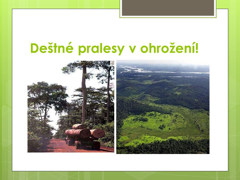 Deštné pralesy v ohrožení!