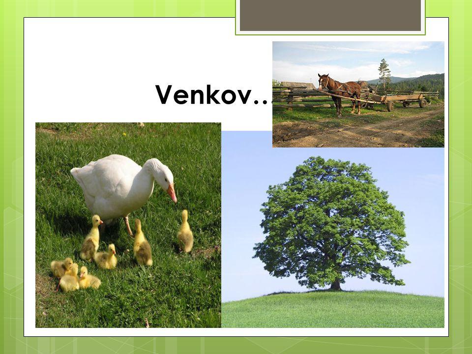 Venkov…