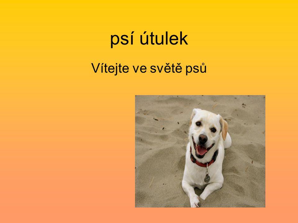 psí útulek Vítejte ve světě psů