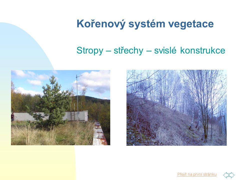 Kořenový systém vegetace