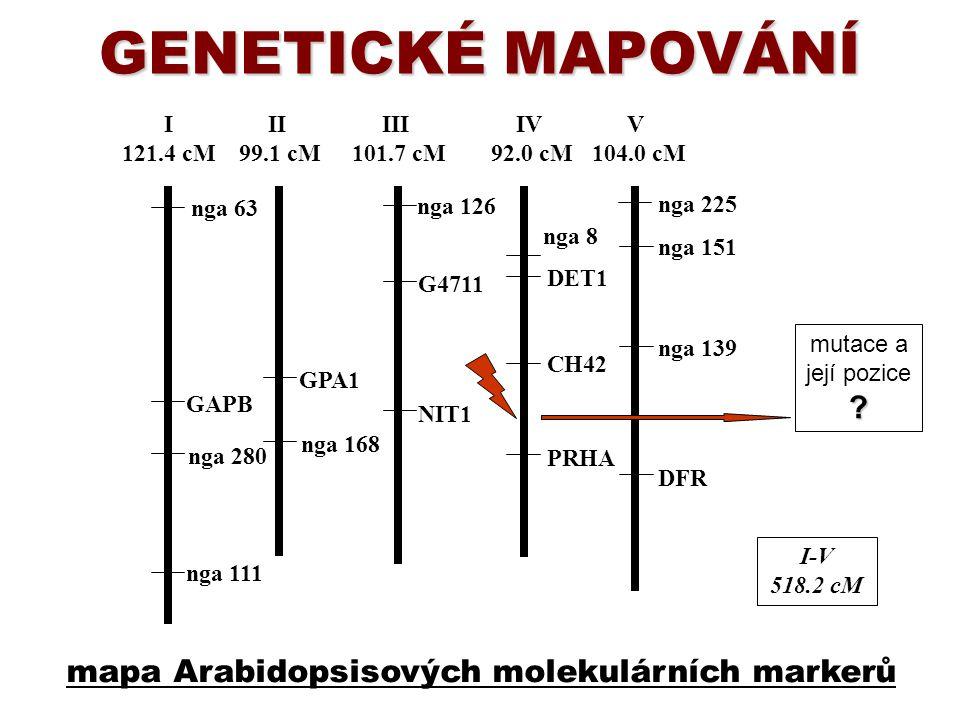GENETICKÉ MAPOVÁNÍ mapa Arabidopsisových molekulárních markerů I