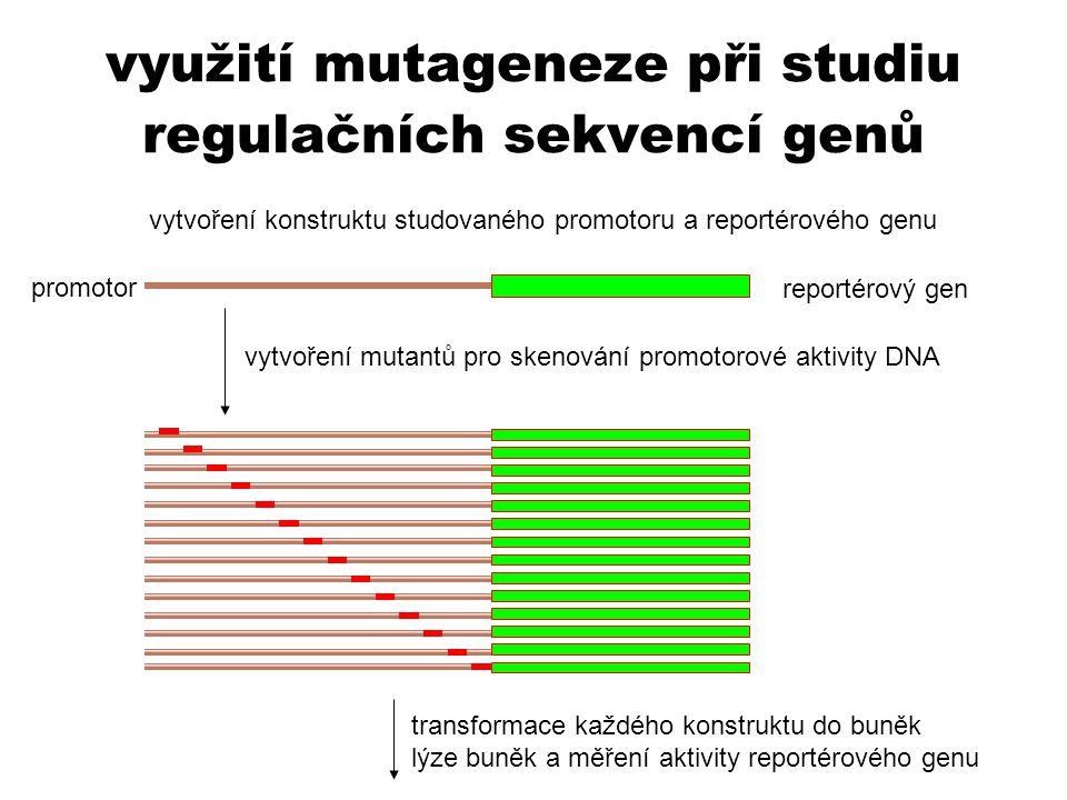 využití mutageneze při studiu regulačních sekvencí genů