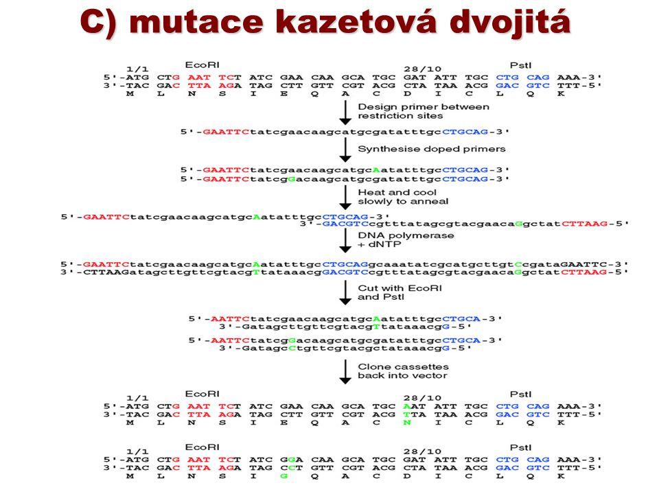 C) mutace kazetová dvojitá