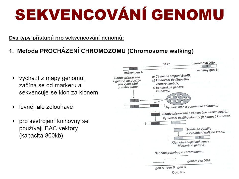 SEKVENCOVÁNÍ GENOMU Dva typy přístupů pro sekvencování genomů: 1. Metoda PROCHÁZENÍ CHROMOZOMU (Chromosome walking)