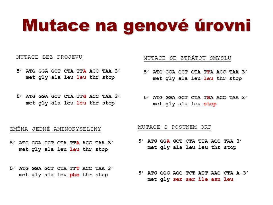 Mutace na genové úrovni