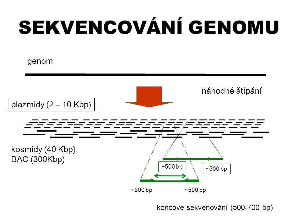 SEKVENCOVÁNÍ GENOMU genom náhodné štípání plazmidy (2 – 10 Kbp)