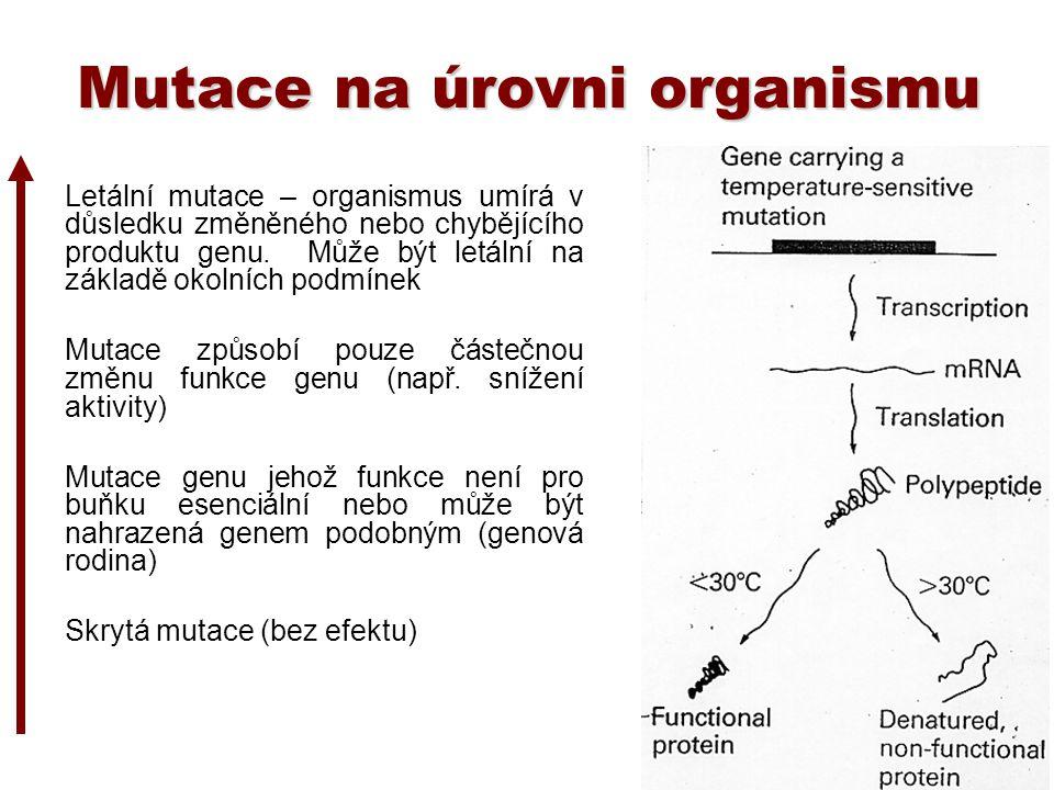 Mutace na úrovni organismu