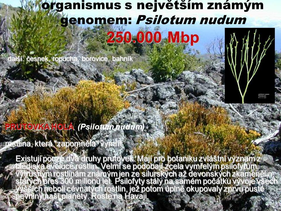 organismus s největším známým genomem: Psilotum nudum 250.000 Mbp