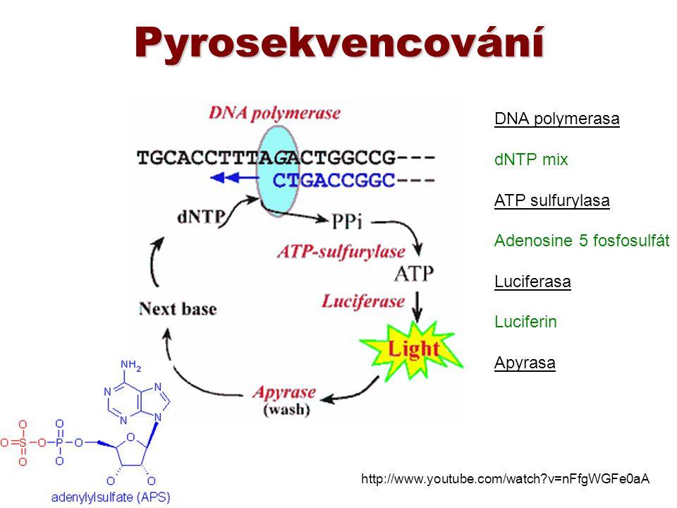 Pyrosekvencování DNA polymerasa dNTP mix ATP sulfurylasa