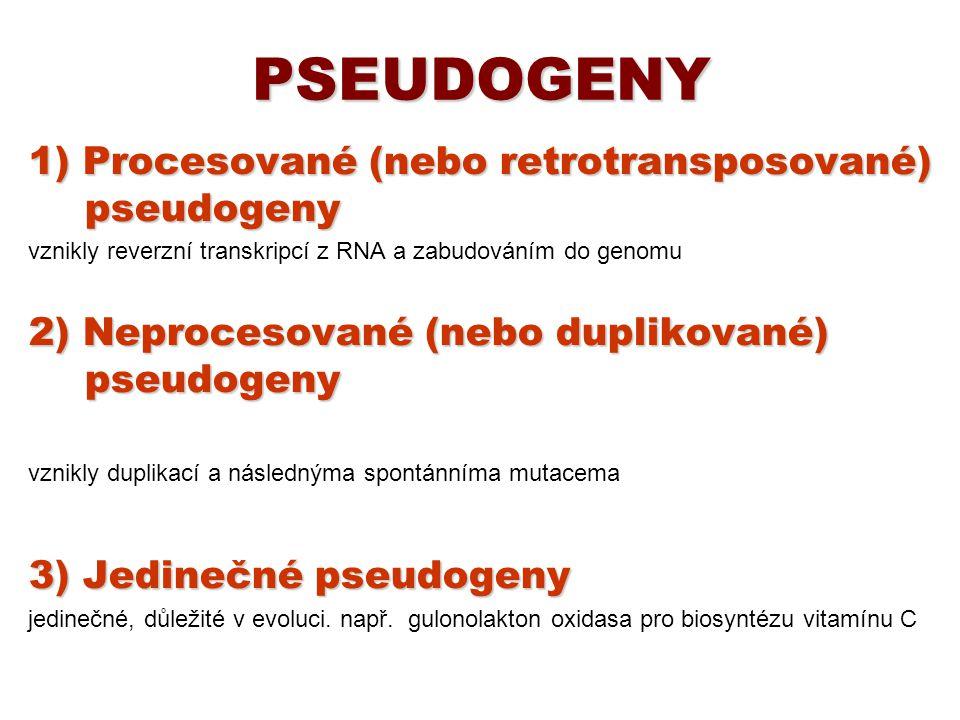 PSEUDOGENY 1) Procesované (nebo retrotransposované) pseudogeny