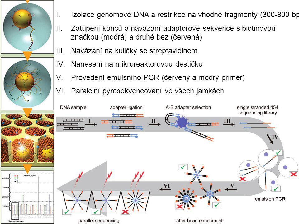 Izolace genomové DNA a restrikce na vhodné fragmenty (300-800 bp)