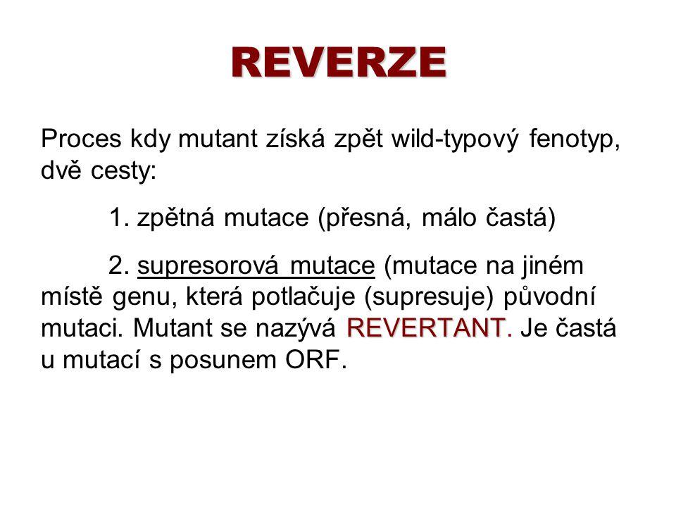 REVERZE Proces kdy mutant získá zpět wild-typový fenotyp, dvě cesty: