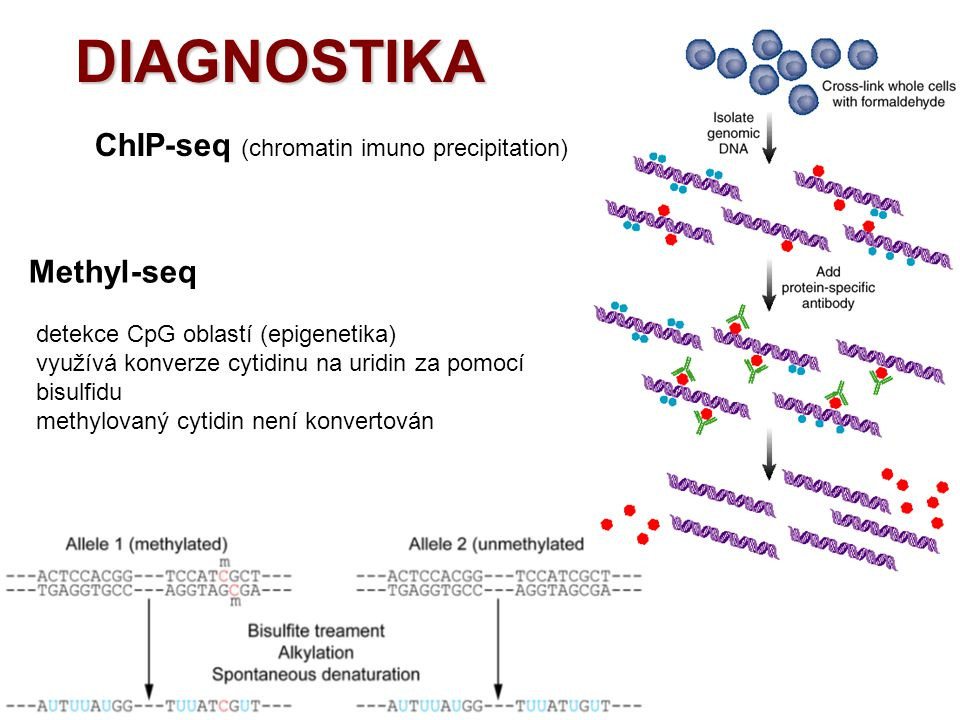 DIAGNOSTIKA ChIP-seq (chromatin imuno precipitation) Methyl-seq
