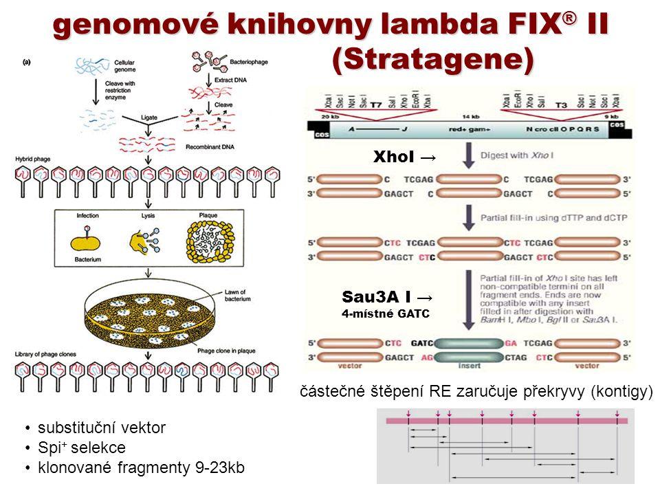 genomové knihovny lambda FIX® II (Stratagene)
