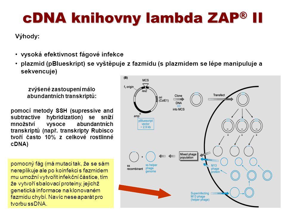 cDNA knihovny lambda ZAP® II