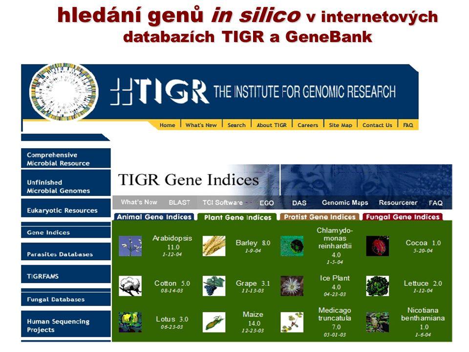 hledání genů in silico v internetových databazích TIGR a GeneBank