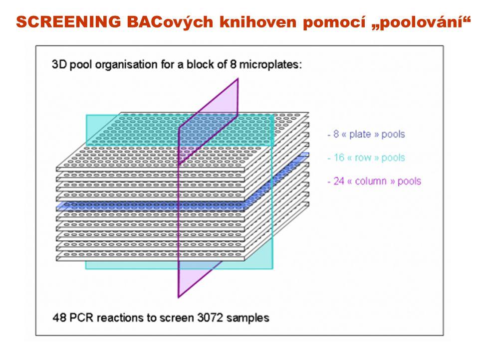 """SCREENING BACových knihoven pomocí """"poolování"""