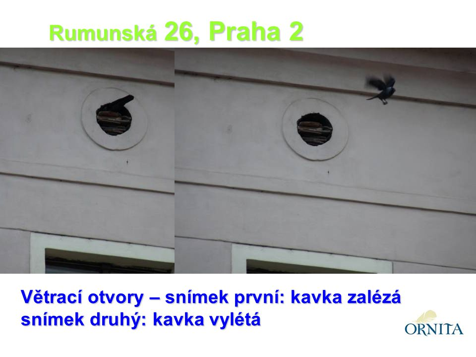 Větrací otvory – snímek první: kavka zalézá snímek druhý: kavka vylétá