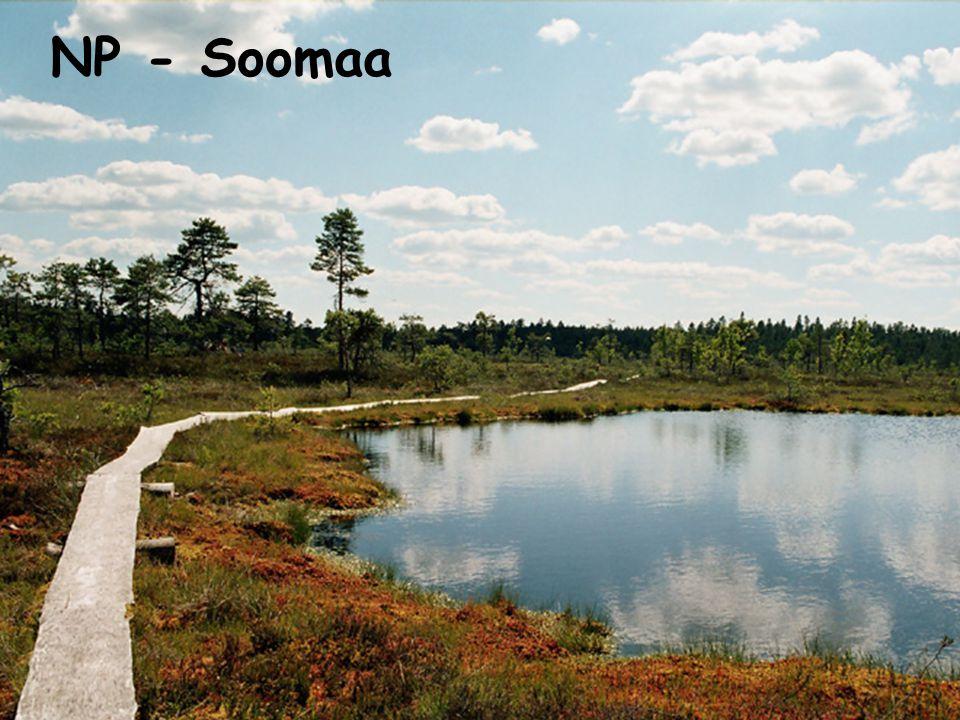 NP - Soomaa