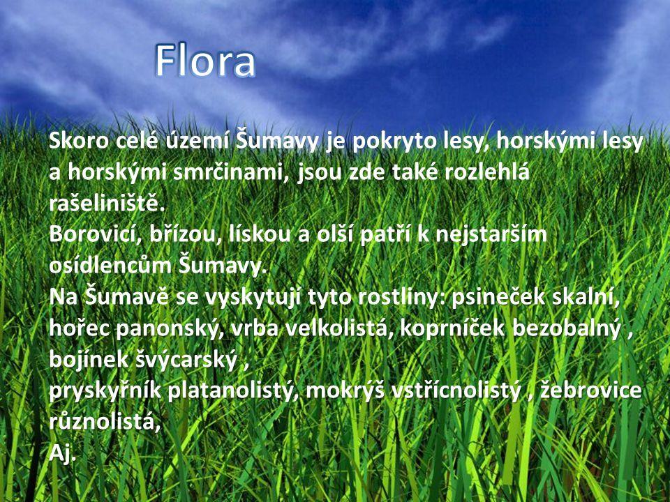 Flora Skoro celé území Šumavy je pokryto lesy, horskými lesy a horskými smrčinami, jsou zde také rozlehlá rašeliniště.